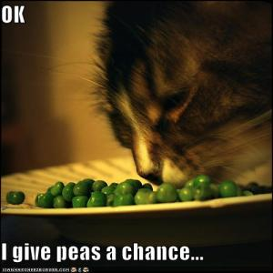 funny-pictures-cat-gives-peas-a-chance1